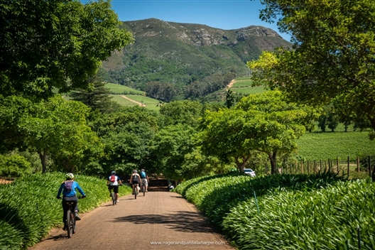 Constantia Valley and Winelands Ebike tour